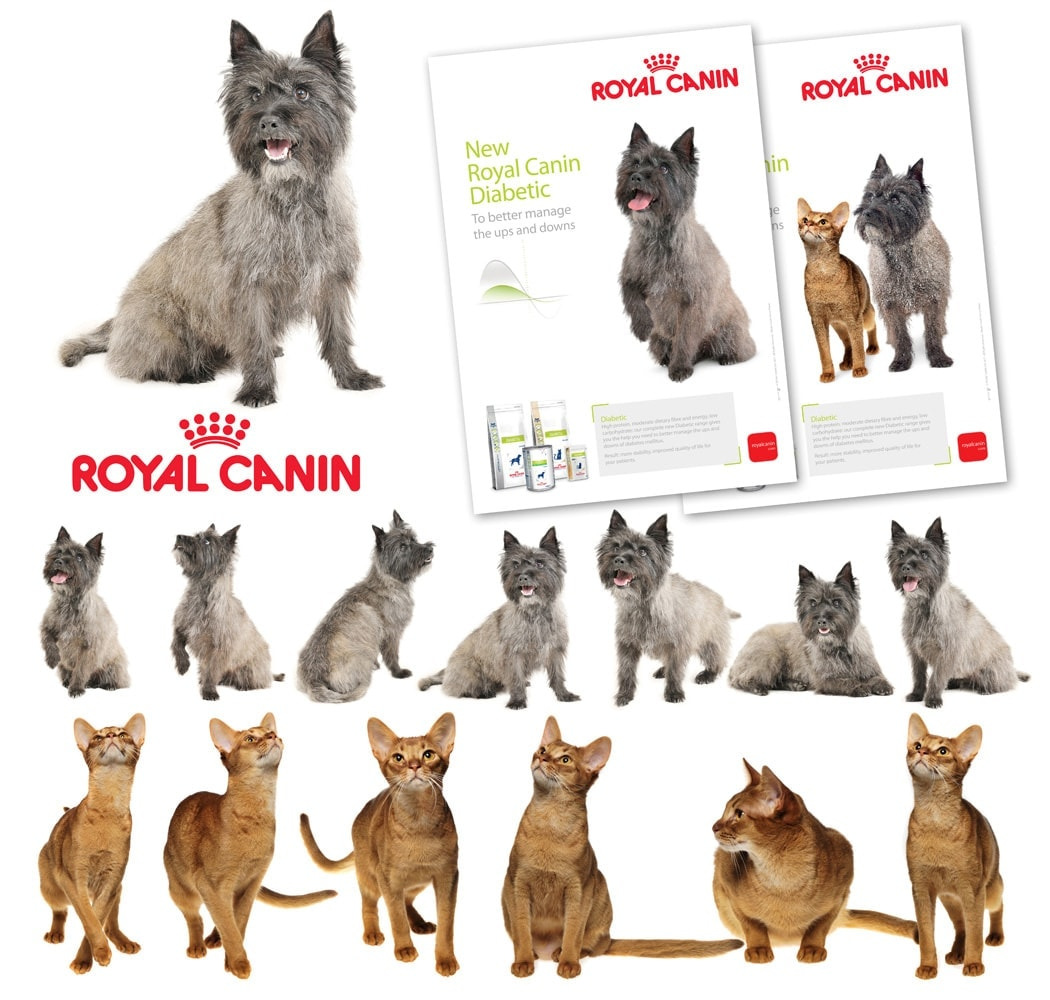 Product Shot - Animals - Randburg, Johannesburg- Royal Canin